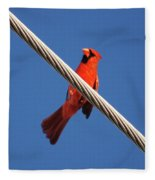 5- Cardinal Fleece Blanket
