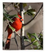 Img_0001 - Northern Cardinal Fleece Blanket