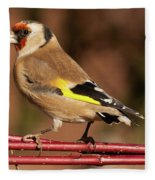 European Goldfinch Bird Close Up   Fleece Blanket