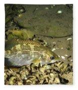 Rock Bass Fleece Blanket