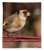 European Goldfinch Bird Close Up   Fleece Blanket