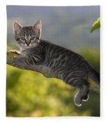 Kitten In A Tree Fleece Blanket