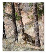 Mule Deer In The Pike National Forest Of Colorado Fleece Blanket
