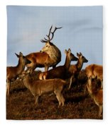 Red Deer In The Highlands Fleece Blanket
