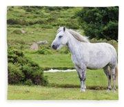 A Beautiful White Dartmoor Pony, Devon, England Fleece Blanket