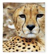 A Cheetah's Portrait Fleece Blanket
