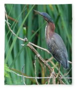 A Green Heron By The Canal Fleece Blanket