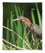 A Green Heron Stalks Prey Fleece Blanket