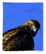 A Hawk Looking Back  Fleece Blanket