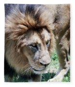A Male Lion, Panthera Leo, King Of Beasts Fleece Blanket