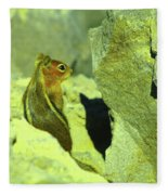 A Perky Chipmunk  Fleece Blanket