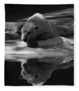 A Polar Bear Reflects Fleece Blanket