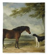 A Pony With A Dog Fleece Blanket