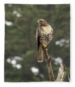 A Red-tailed Hawk Juvenile Fleece Blanket