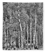 A Stand Of Aspen Trees In Black And White Fleece Blanket