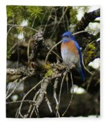 A Western Bluebird In A Tree Fleece Blanket