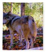 A Wolf Gazes Back Fleece Blanket