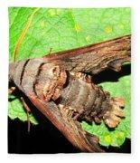 Abbotts Sphinx Moth Fleece Blanket