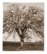 Acacia Tree In Sepia Fleece Blanket