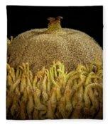 Acorn Emerging Fleece Blanket