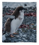 Adelie Penguin Chick Running Along Stony Beach Fleece Blanket