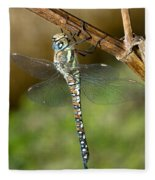 Aeshna Mixta Dragonfly Fleece Blanket