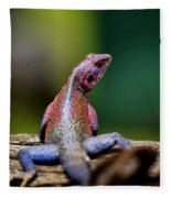African Agama Lizard  Fleece Blanket