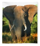 African Bull Elephant Fleece Blanket