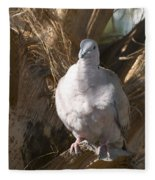African Collared Dove 3 Fleece Blanket