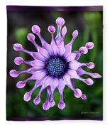African Daisy - Hdr Fleece Blanket