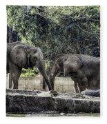 African Elephants_hdr Fleece Blanket