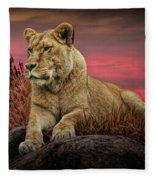 African Female Lion In The Grass At Sunset Fleece Blanket