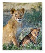 African Lion Panthera Leo Family Fleece Blanket