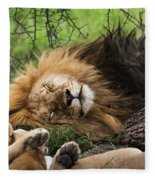 African Lion Sleeping In Serengeti Fleece Blanket