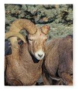 After The Rut Bighorn Sheep Fleece Blanket