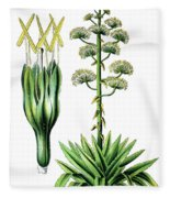 Agave Americana, Common Names Century Plant, Maguey Or American  Fleece Blanket
