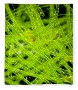 Algae Spirogyra Sp., Lm Fleece Blanket