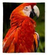 Aloof In Red Fleece Blanket