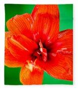 Amaryllis Contrast Orange Amaryllis Flower Appearing To Float Above A Deep Green Background Fleece Blanket