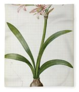 Amaryllis Vittata Fleece Blanket