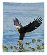 American Bald Eagle Sets Down On Fish Fleece Blanket