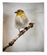 American Golden Finch Winter Plumage 6 Fleece Blanket