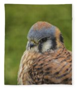 American Kestrel Portrait Fleece Blanket