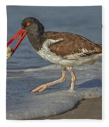 American Oystercatcher Grabs Breakfast Fleece Blanket