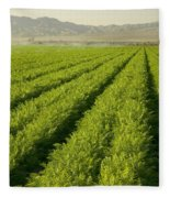 An Organic Carrot Field Fleece Blanket