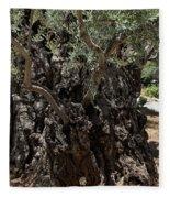 Ancient Olive Tree Fleece Blanket