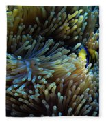 Anemonefish Hiding Fleece Blanket