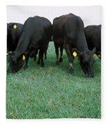 Angus Cattle Fleece Blanket