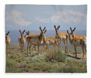 Antelope Fleece Blanket