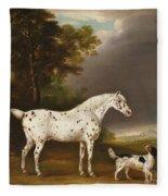 Appaloosa Horse And Spaniel Fleece Blanket